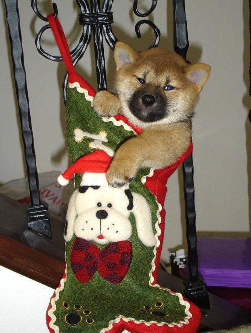 Един подарък :)